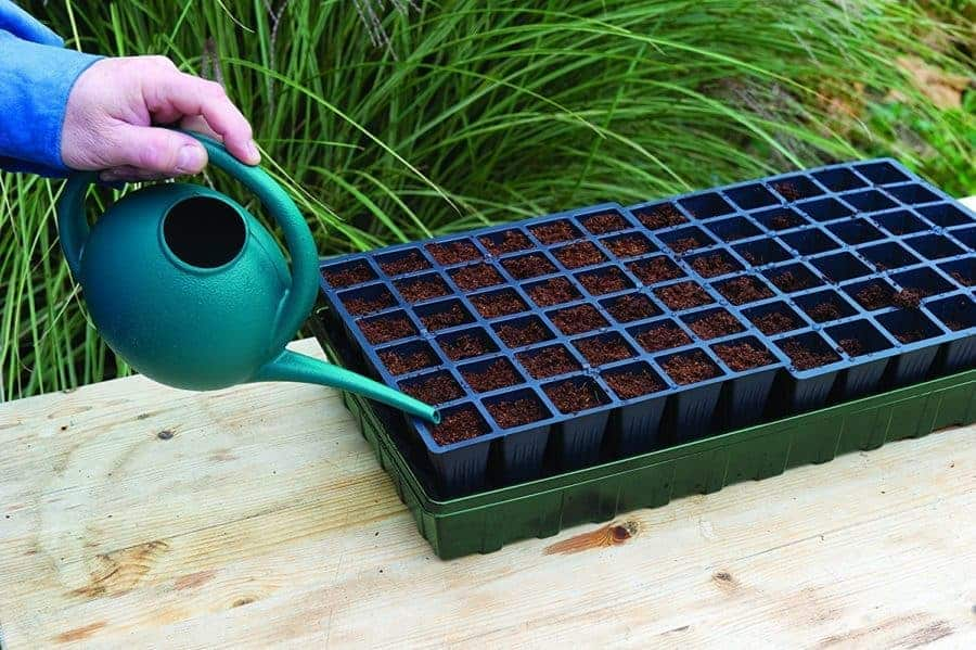 A bottom watering tray can help to reduce many seedling over watering problems