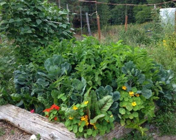 Grow enough food to feed your family