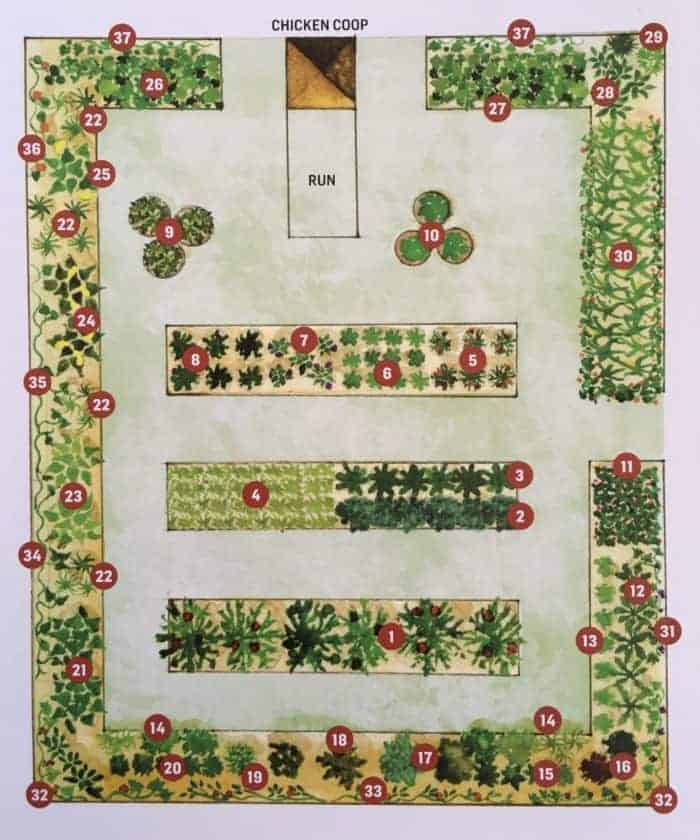 Outstanding Kitchen Garden Designs Plans Layouts Family Food Garden Home Interior And Landscaping Ologienasavecom