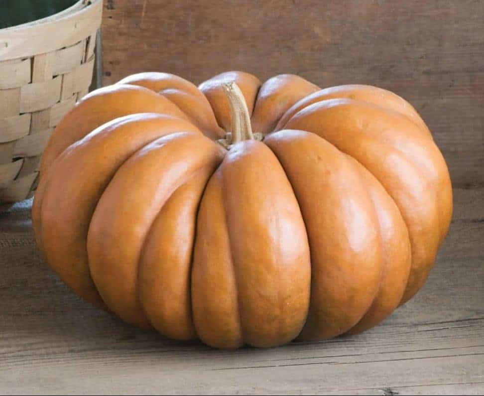 Musquée de Provence heirloom pumpkin