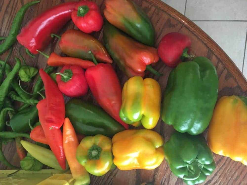 How to ripen peppers indoors