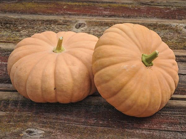 What Variety Is Long Island Cheese Pumpkin