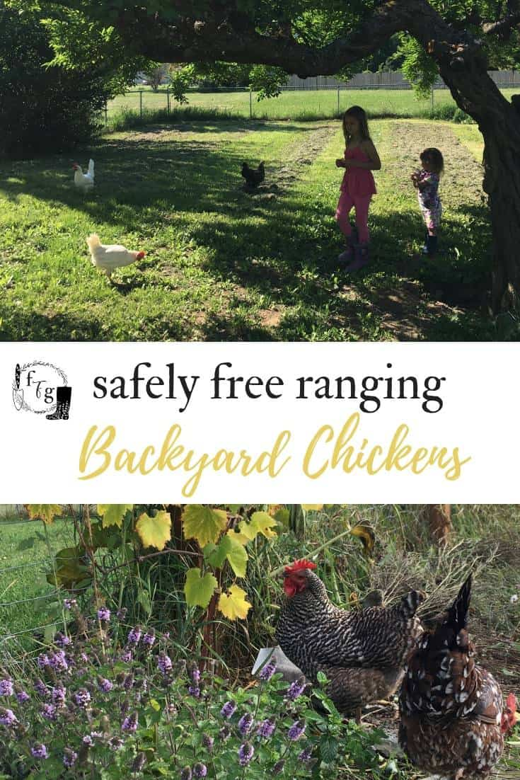 Free ranging chickens in your backyard