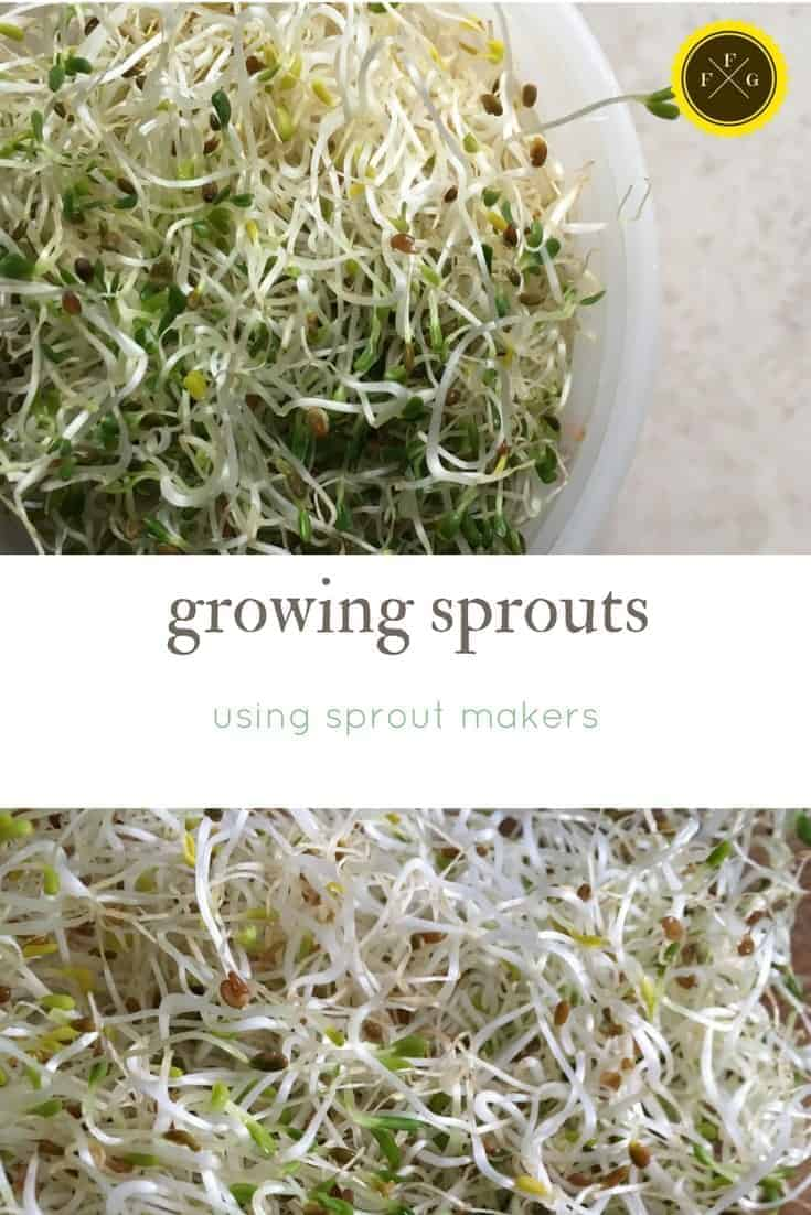 growing sprouts with sprout makers