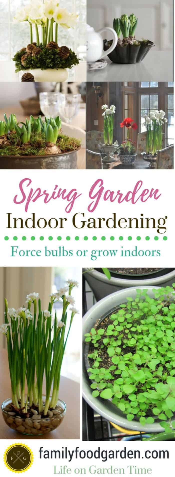 Fun spring garden projects for indoor gardening