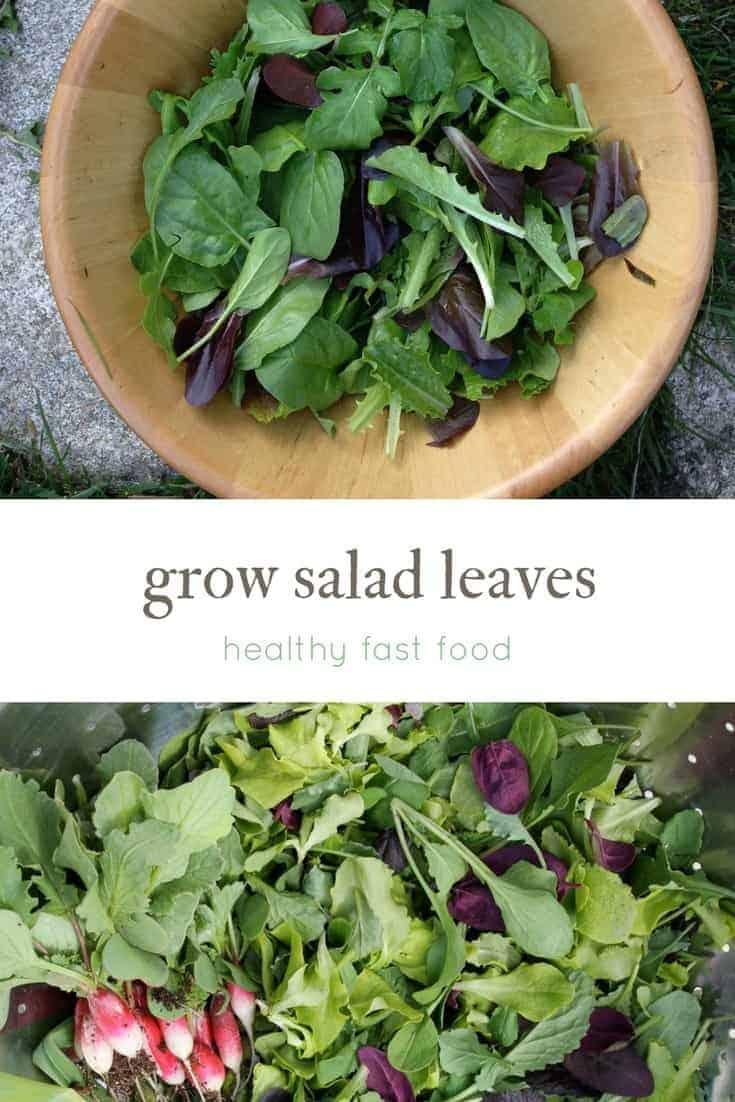 Grow salad leaves year-round