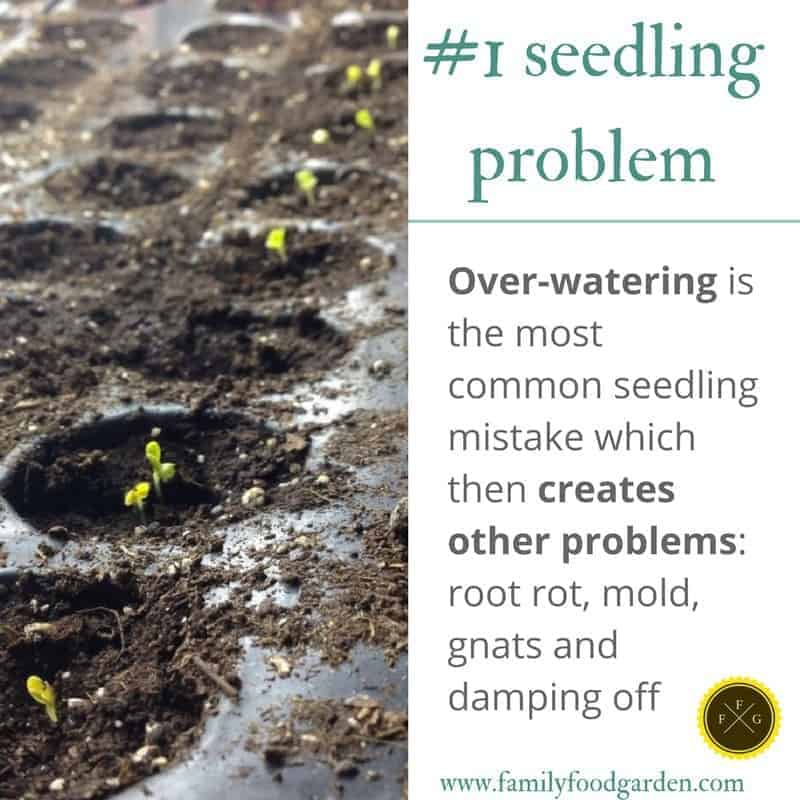 Over watering can cause many seed starting problems