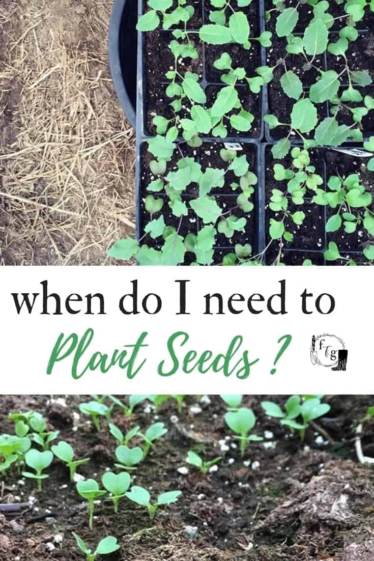 When to plant your seeds indoors or outside