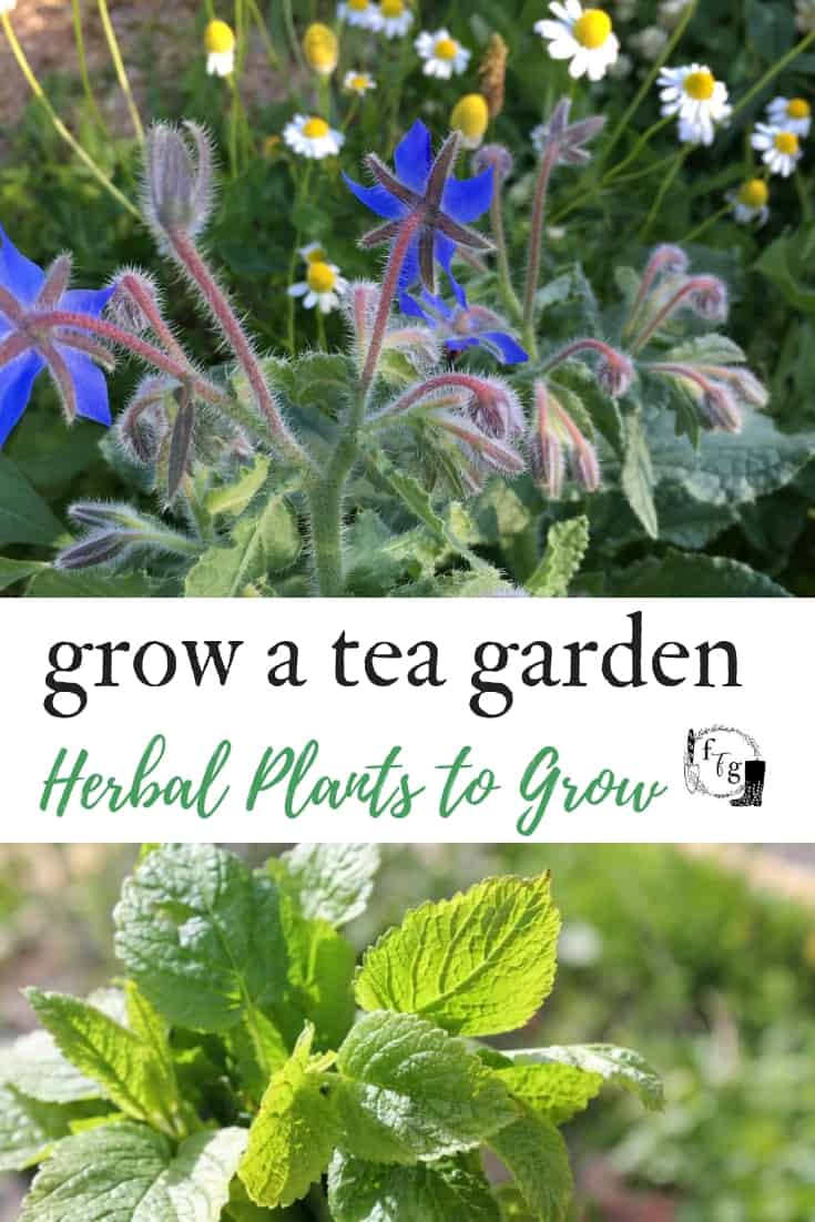 Grow a herbal tea garden #herbaltea #teagarden #herbalism #herbgardening