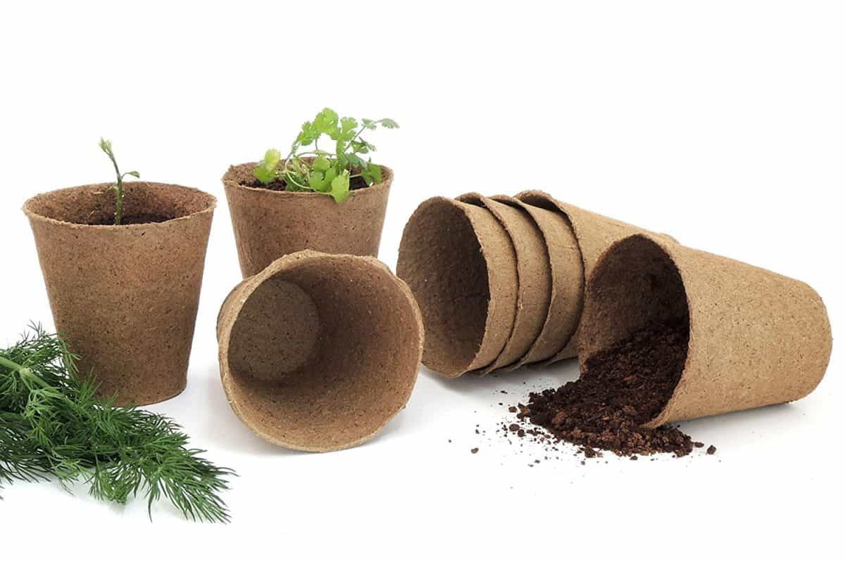 Peat pots for seed starting