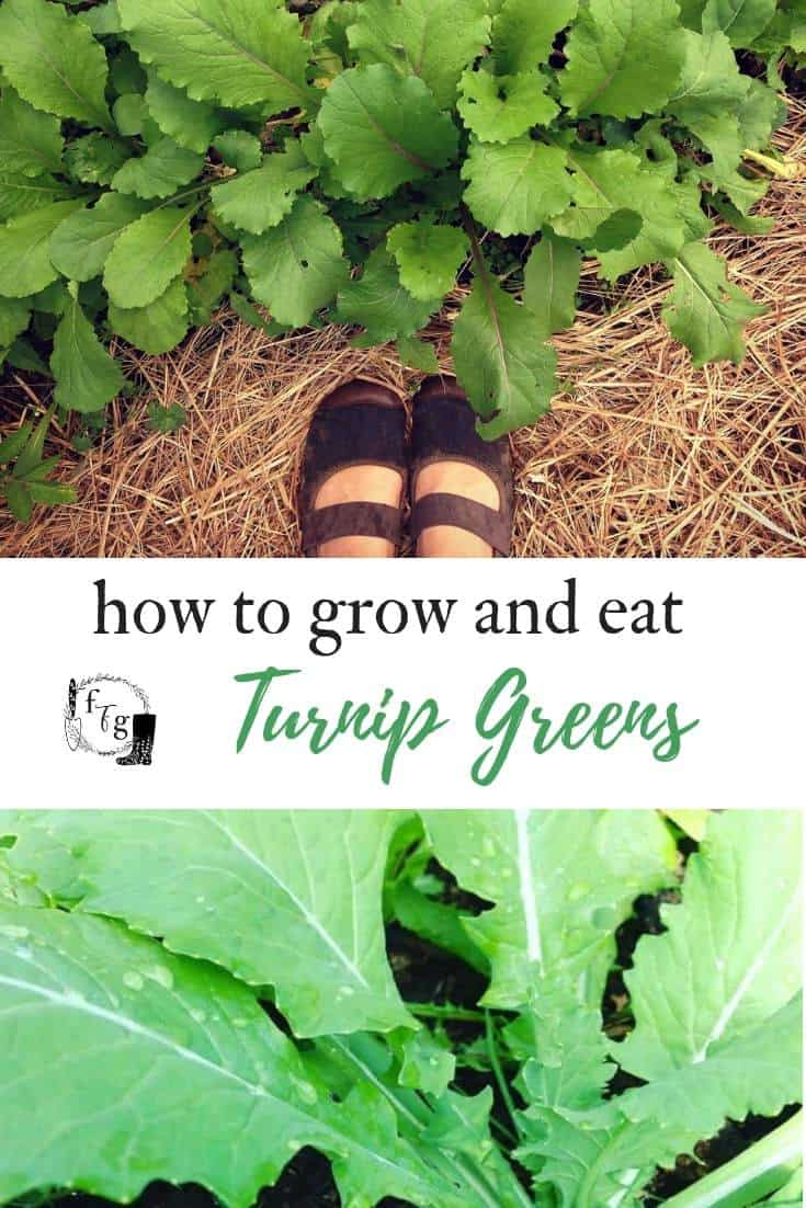 How to grow and eat turnip greens