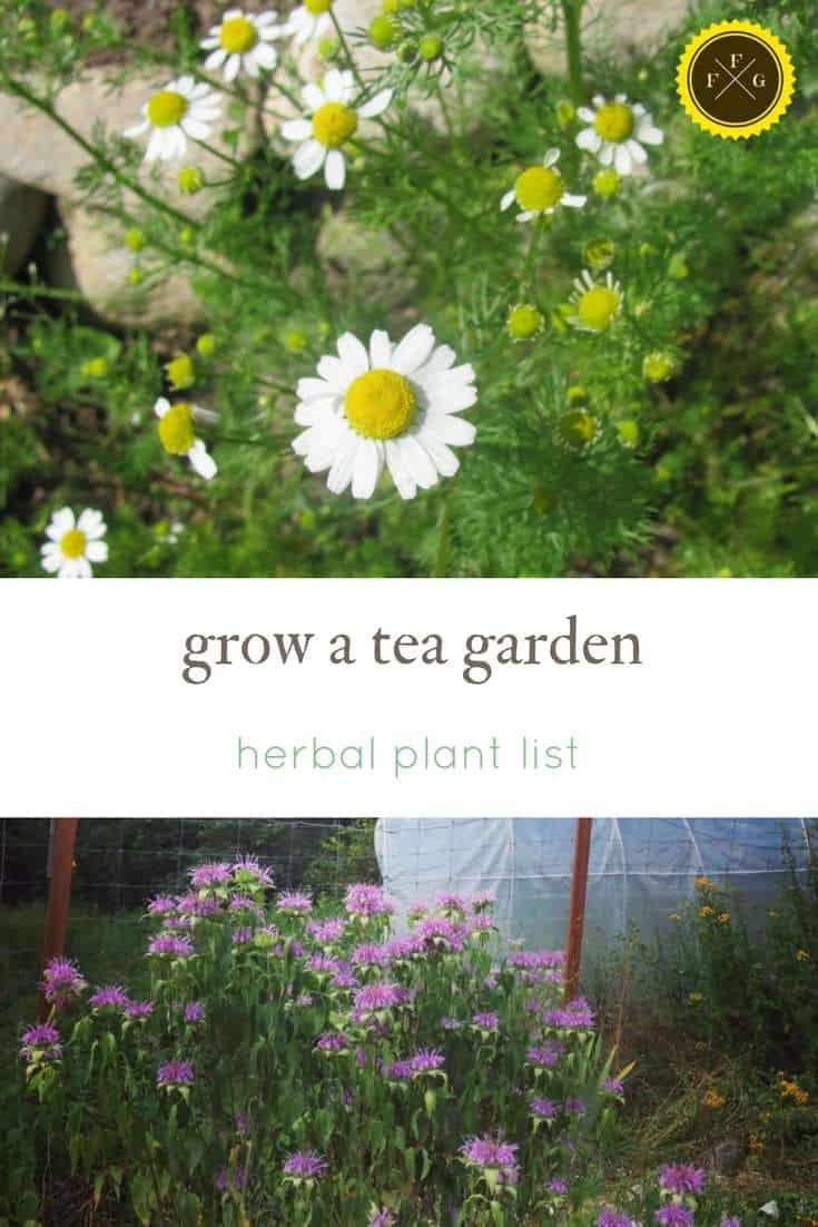 List of herbs for a tea garden