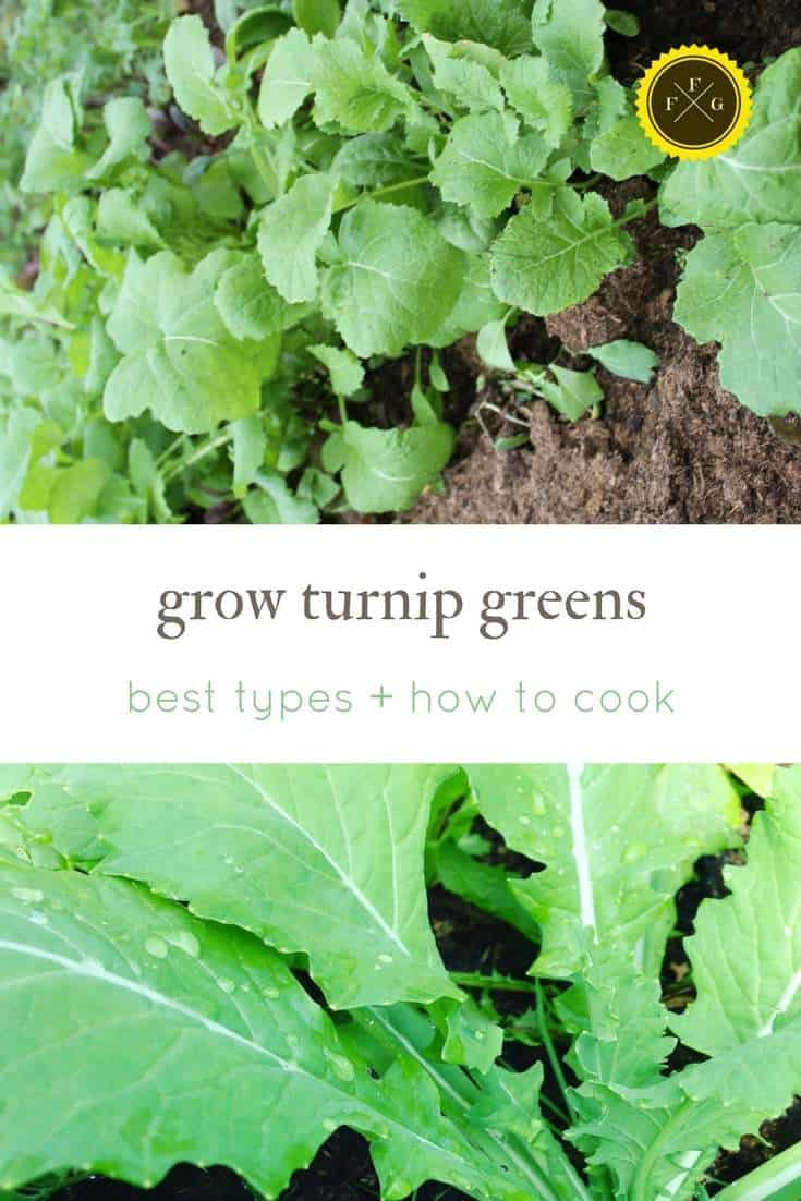Best turnips for turnip greens