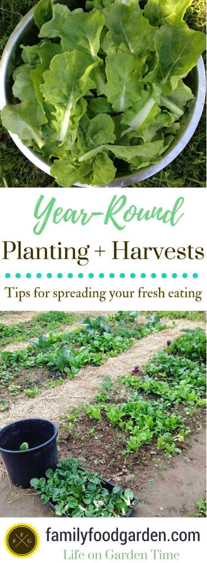 Year-round planting and harvesting