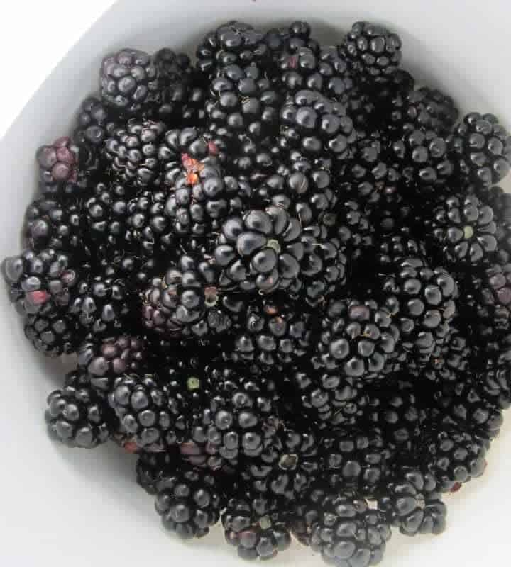 Growing Blackberries: Planting + Pruning Blackberries