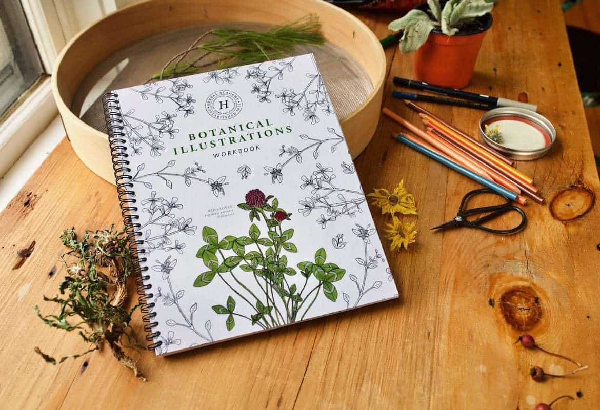 Edible Wild Plants and Herbs- Learn Wildcrafting