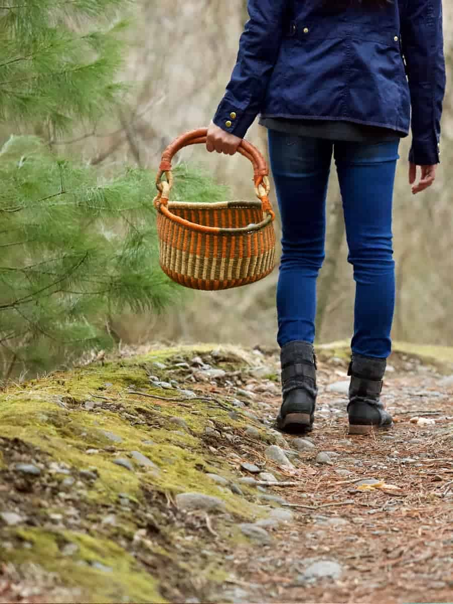 Foraging for wild edibles creates a deeper connection to wild spaces
