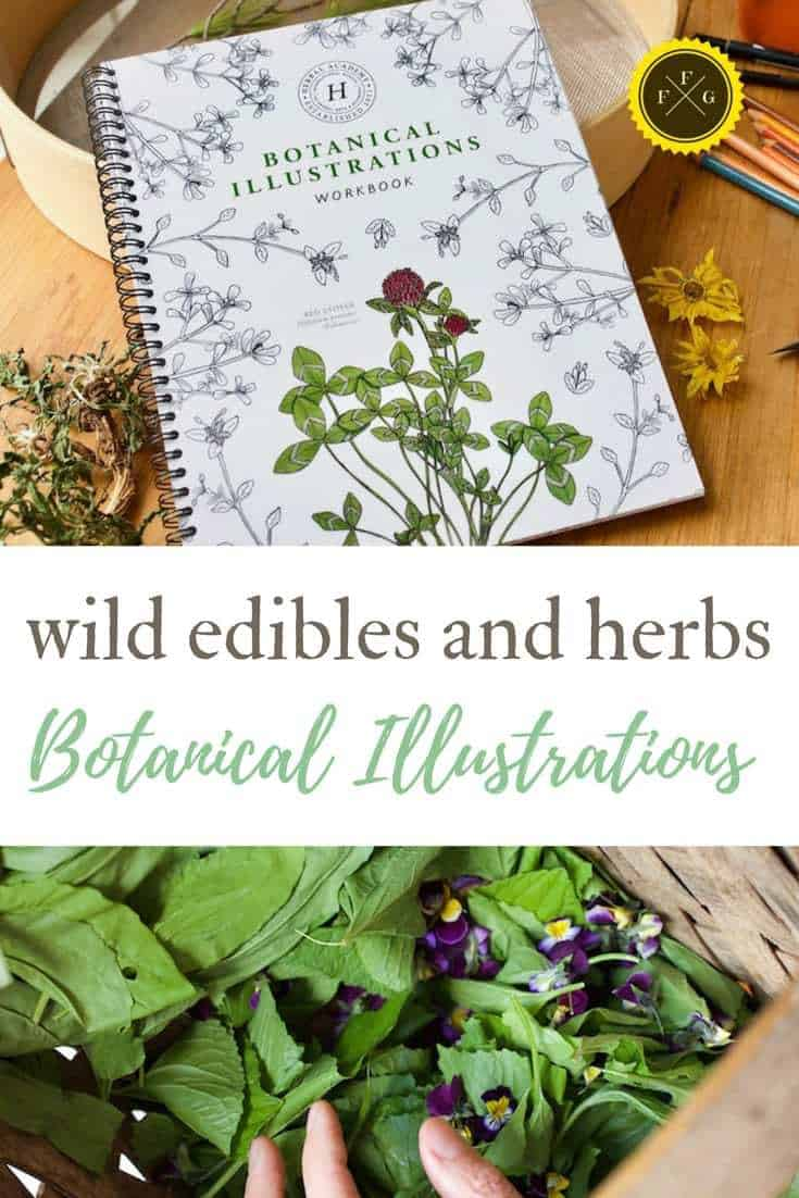 Herbalism & Wildcrafting courses