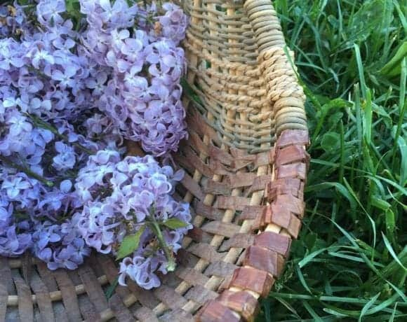 lilac flower recipes