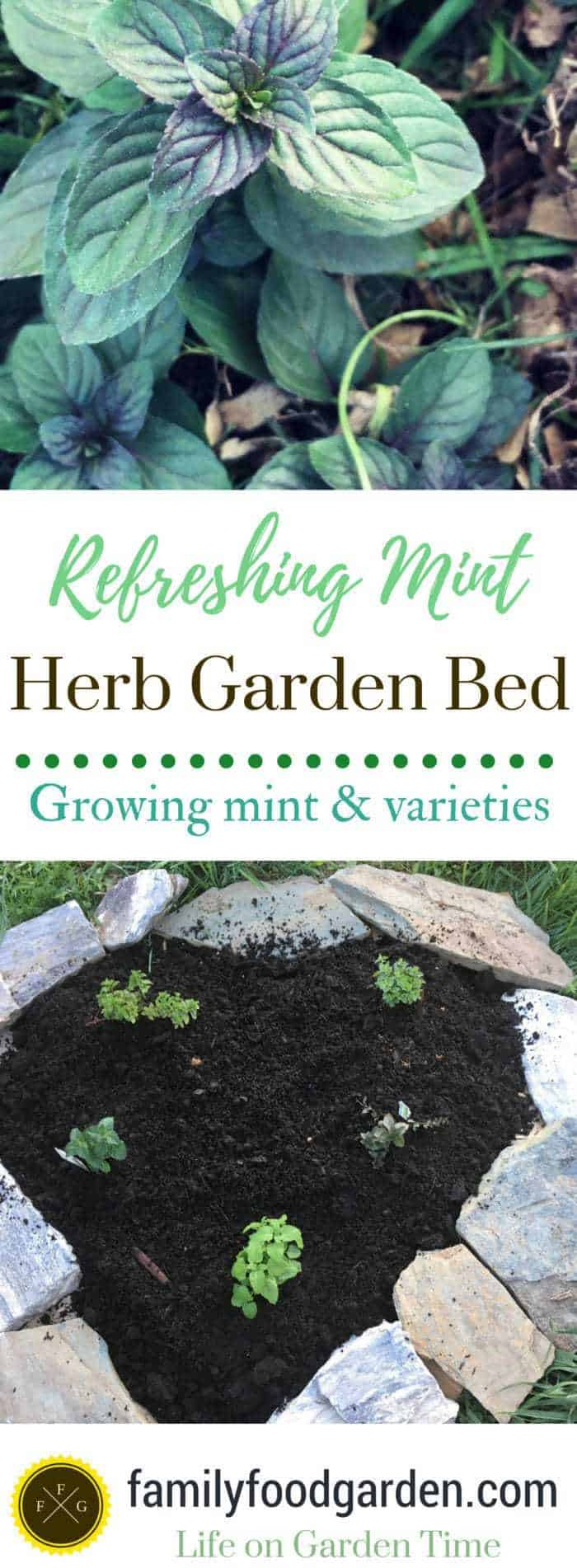 Learn how to grow mint and make a mint herb garden bed