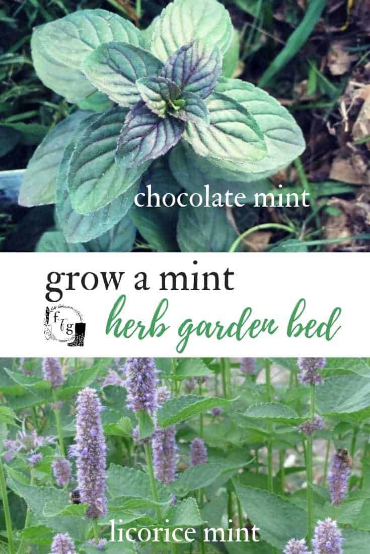 Beautiful mint varieties for a refreshing mint herb garden bed #herbs #mint #herbgardening #gardendesign #gardenbed #herbgardenbed #mintgarden