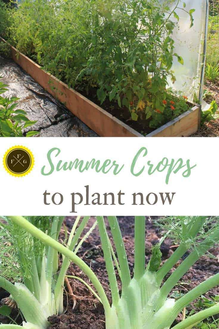 Watch Gardening Tips for Summer video
