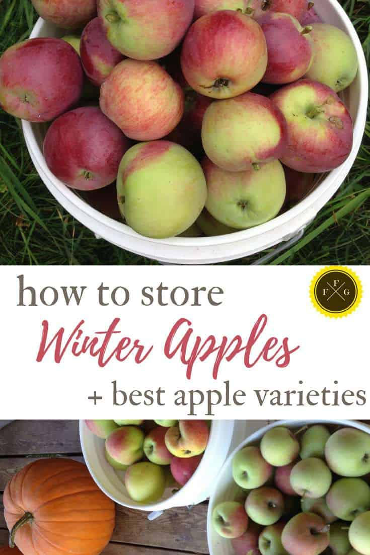 Winter apple varieties and how to store apples store-bought or freshly harvested