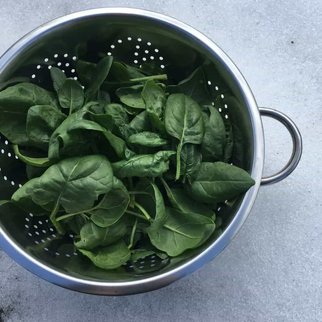 Growing spinach in the winter garden