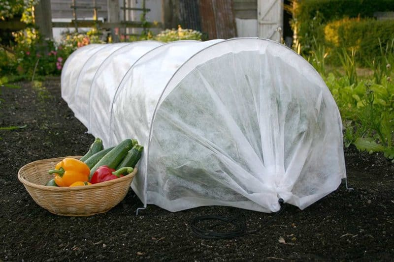 Use a hoop tunnel to deter pests like cabbage worms