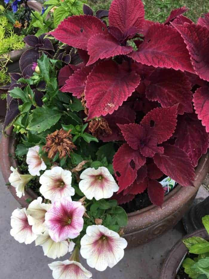 Small backyard flower gardening in containers