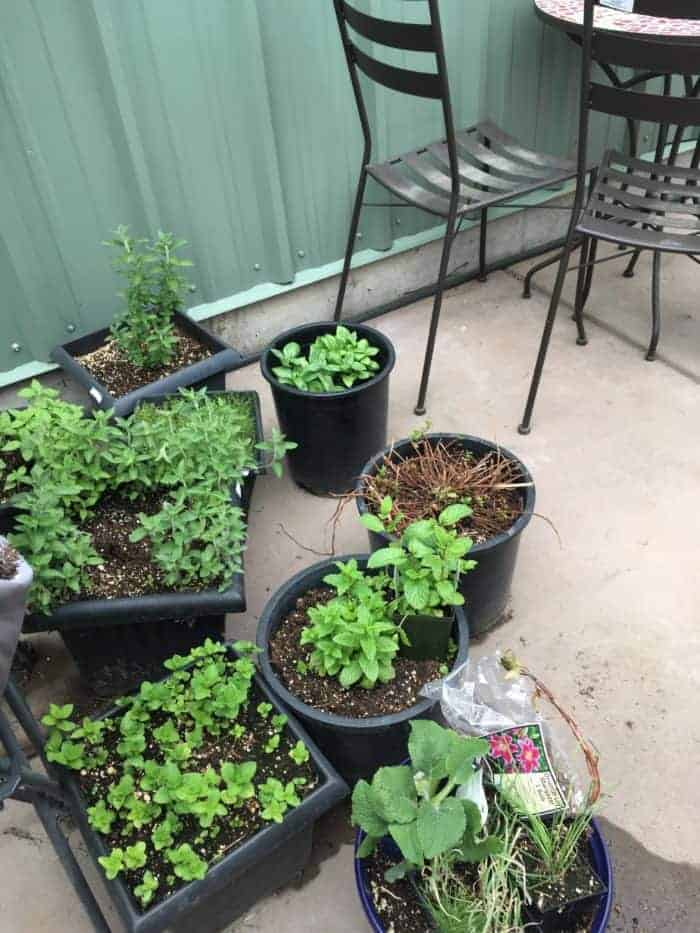 Backyard patio herb garden