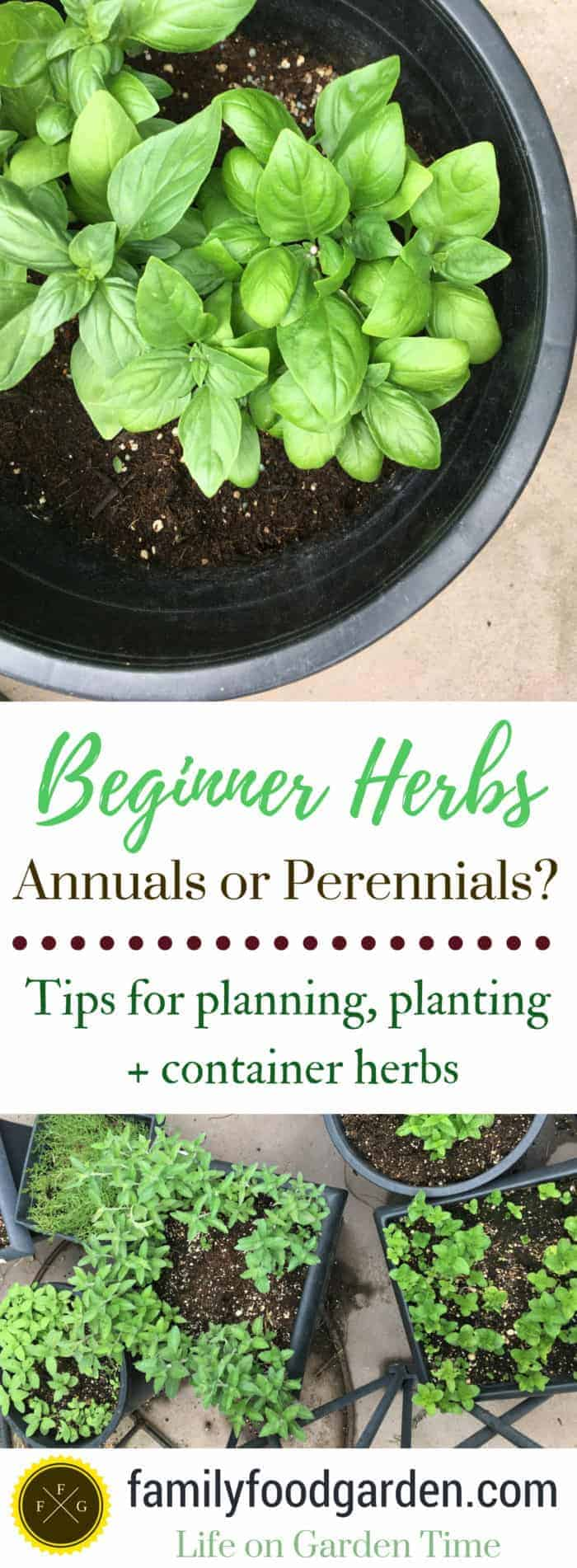 Beginner herb gardening tips