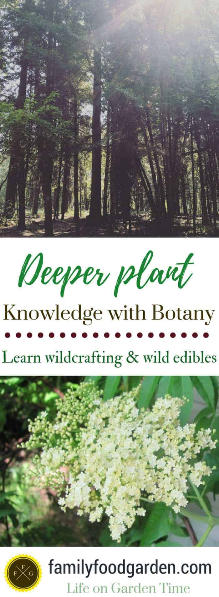 Learn botany and edible wild plants