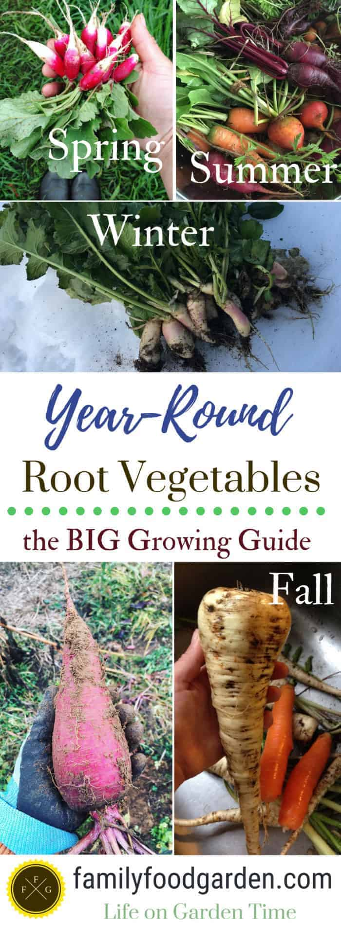Big guide to growing root vegetables