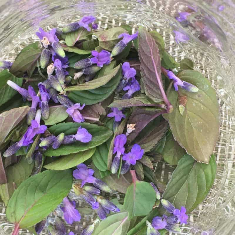 Lavender chocolate mint tea blend