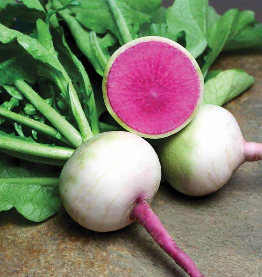 Watermelon radishes are stunning!