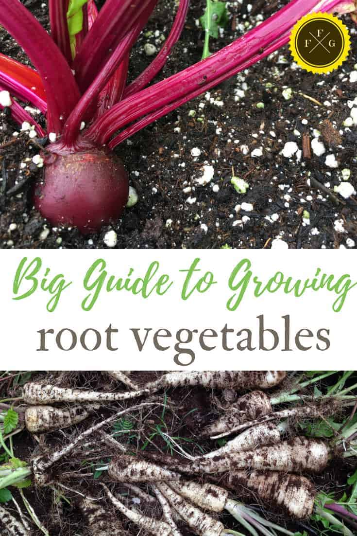 Grow root vegetables