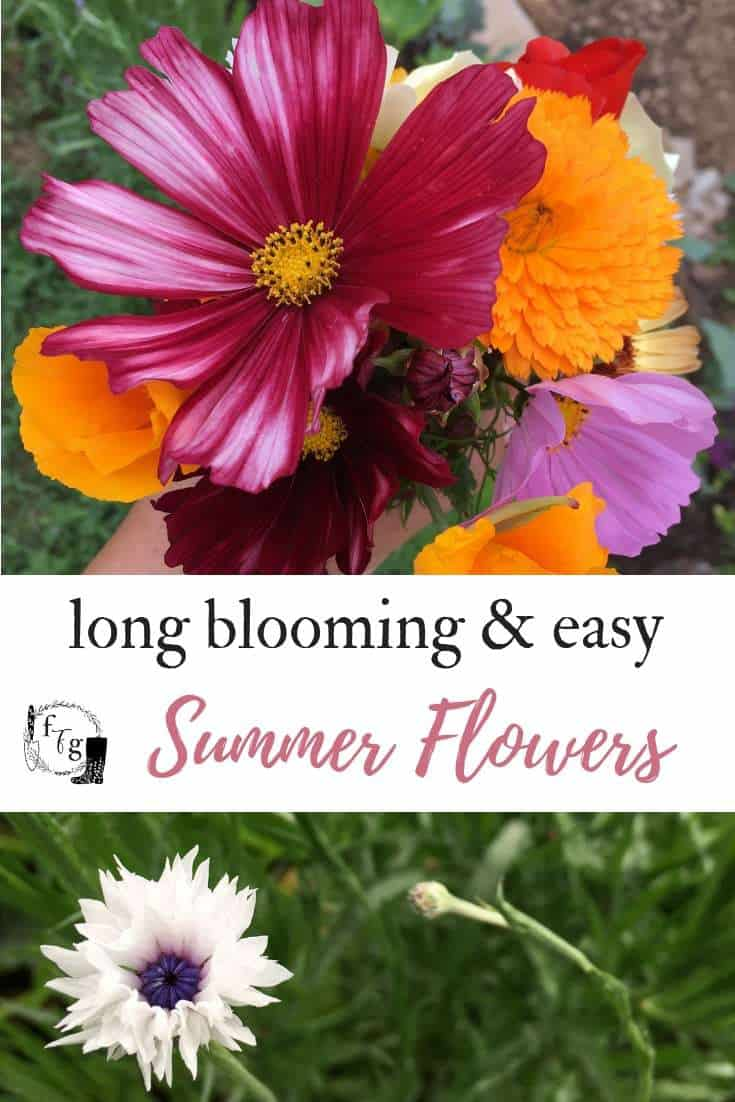 Easy to grow long blooming summer garden flowers