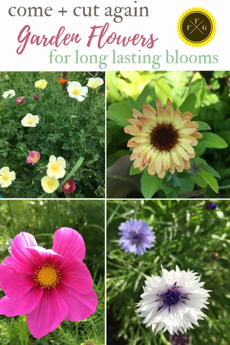 Long lasting summer blooming flowers