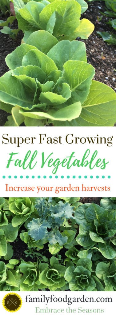 Fast growing fall vegetables for your fall vegetable garden