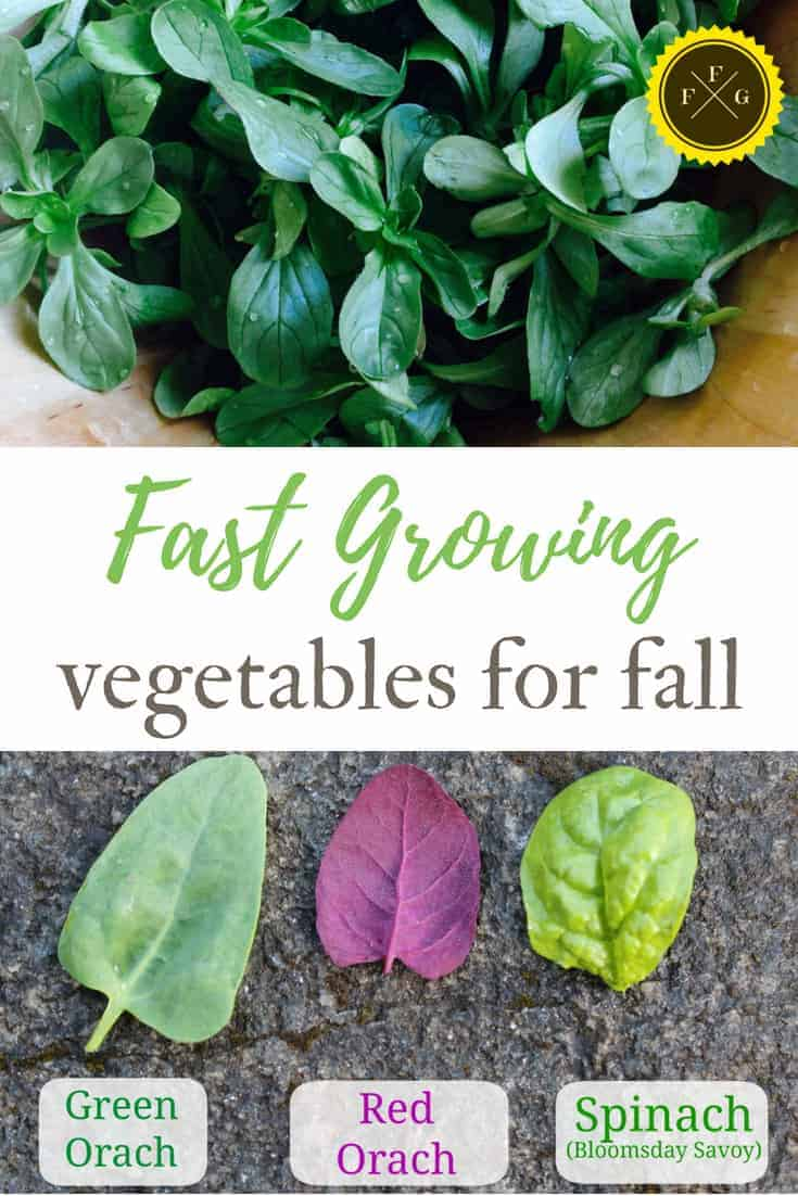 Fall vegetables that grow fast in your fall garden