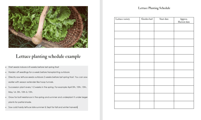 Free printable lettuce planting schedule for growing lettuce