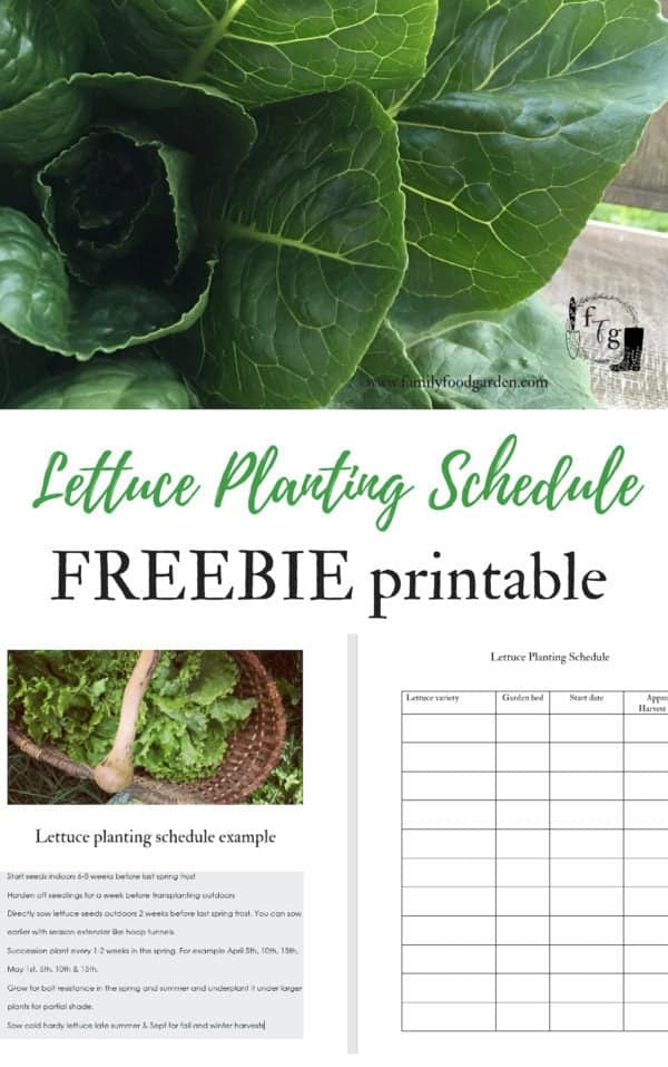 Free lettuce planting schedule