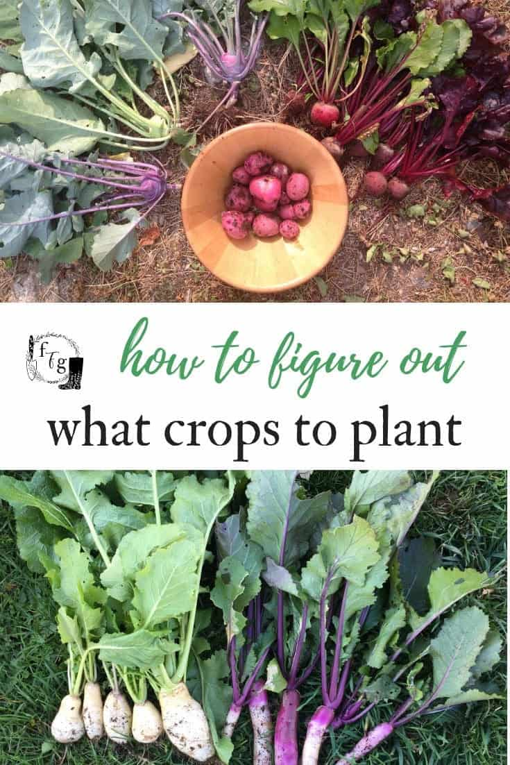 Guide to choosing what crops to plant in your garden