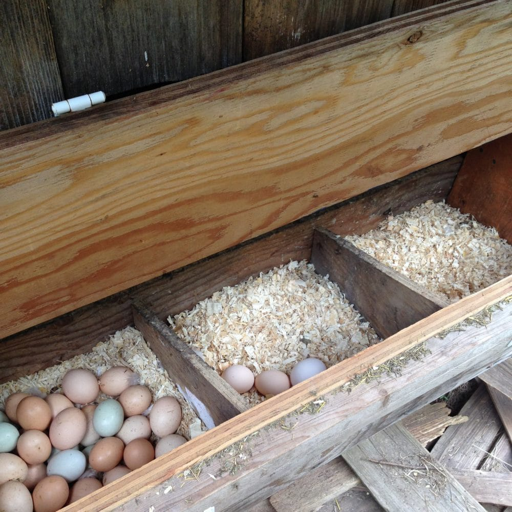 Chicken bedding for nesting boxes