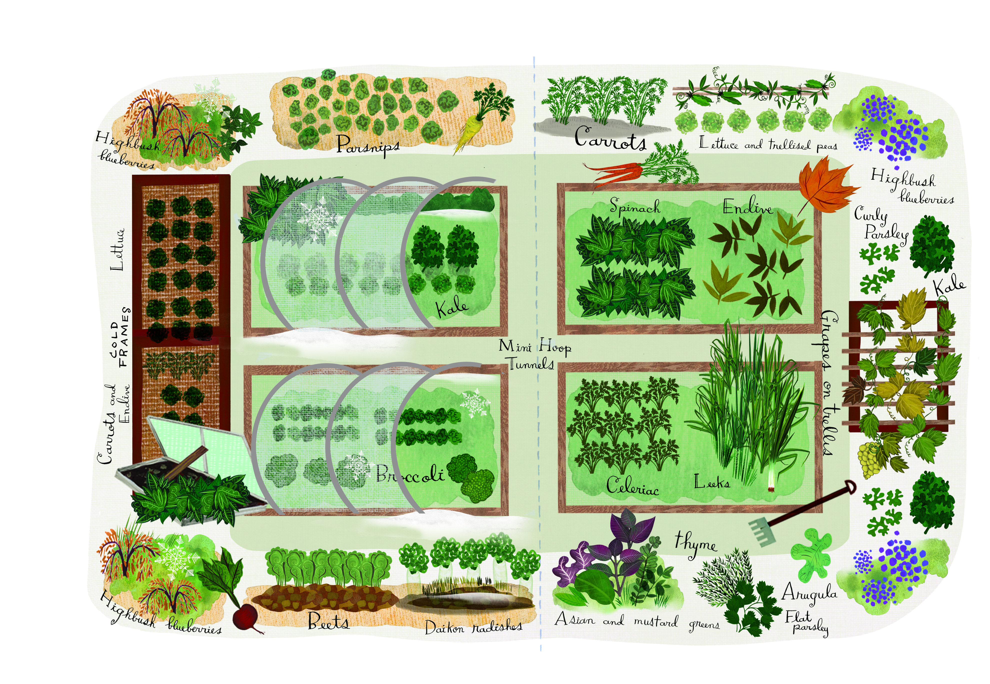 Vegetable Garden Plans, Designs + Layout Ideas | Family Food ... on food salads, food herbs, food pests, office plans, food forest plans, food winter, xeriscape plans, playground plans, food business plans, food weather, food trees, food lesson plans, backyard plans, food blogging, permaculture plans, food gardening, food soup,