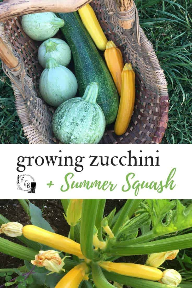 Fun summer squash and zucchini varieties to grow in your garden