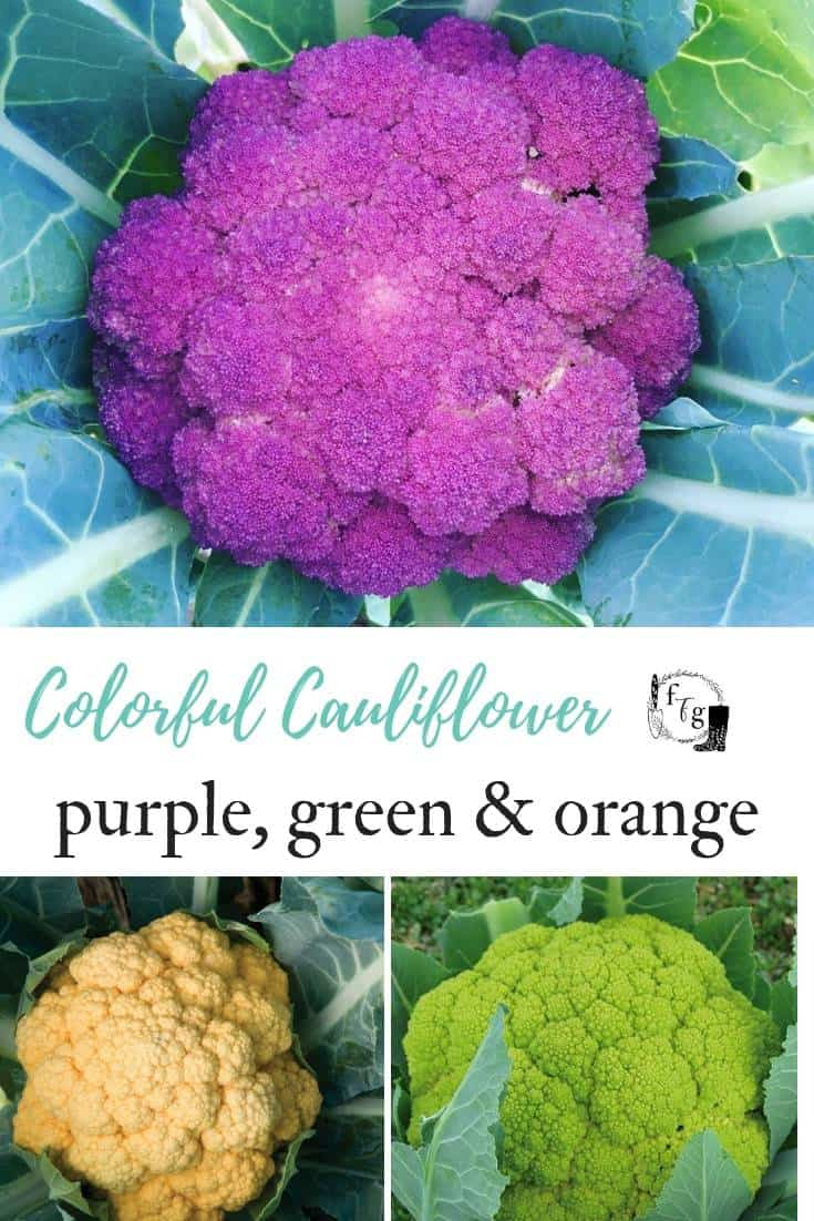 Grow colorful cauliflower varieties!