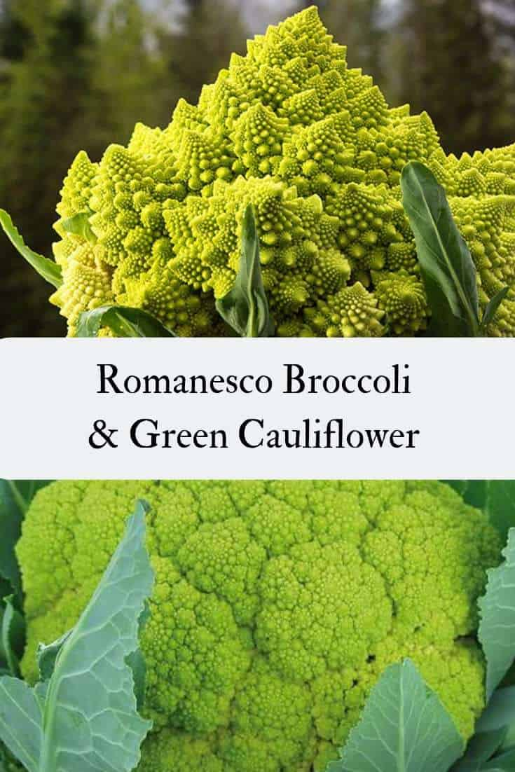 Green Cauliflower can sometimes be mistaken for Romanesco Broccoli