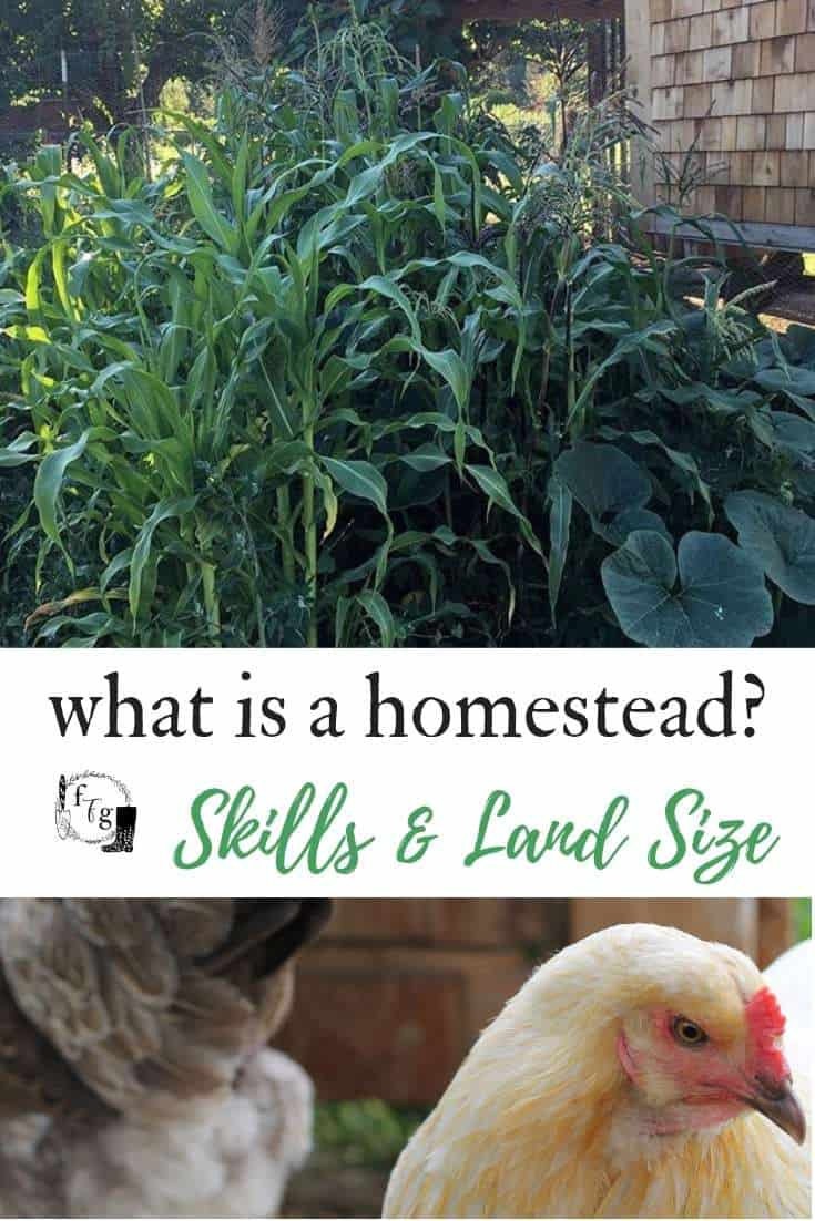 Space and ideas for homesteading